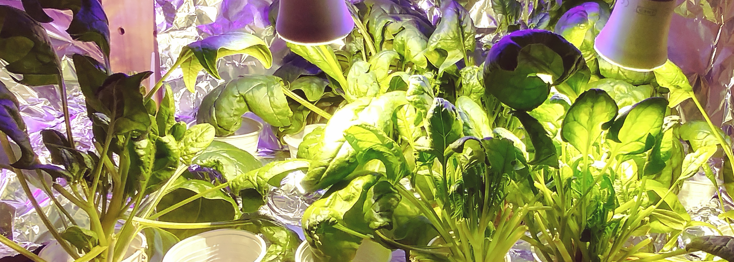 www.growthyield.com Grow your own food wherever you live - High yield crop indoors, hydroponic, aquaponic, apartment growing - how to get the highest crop yield and money return possible.
